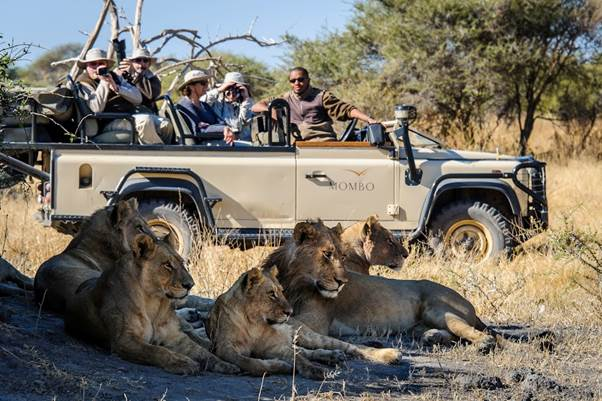 Mombo camp Okavango Delta Botswana lions on game drive