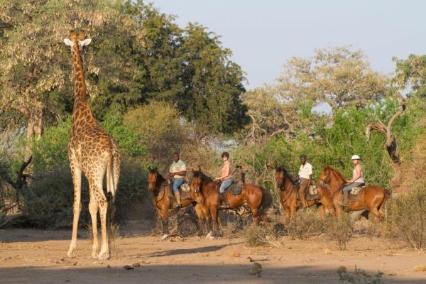 Horse-Riding-Safari-Mashatu-Camp-Tuli-Area-Botswana-giraffe-horses 600 400