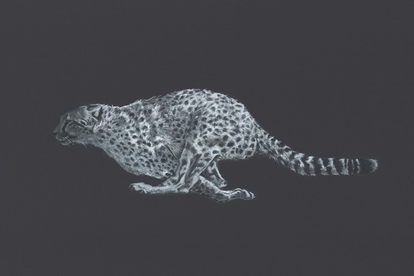 Simon Stevenson White Lightening sketch cheetah running in full flight