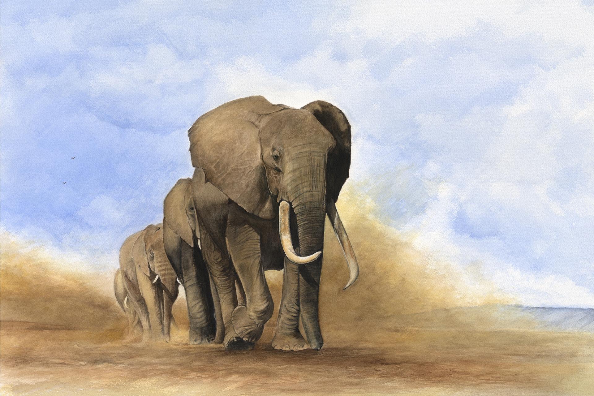 Simon Stevenson A Brush With Africa Wildlife Artist