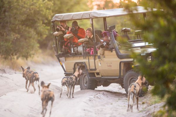 Wild-Dogs-Letaka-Mobile-Safari-Khwai-Community-Area-600-400