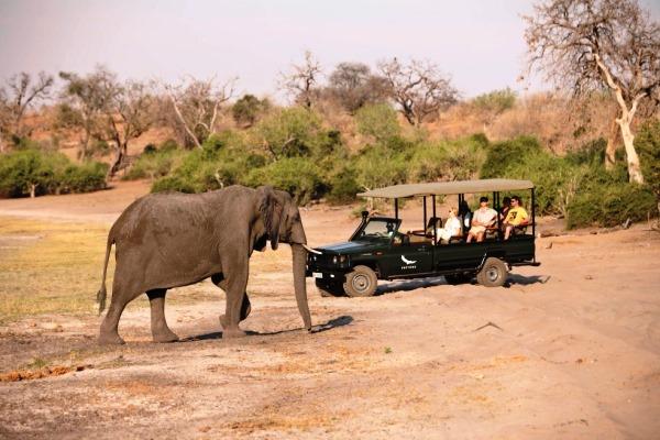 Chobe-Under-Canvas-elephant-wildlife-drive-Andbeyond 600 400