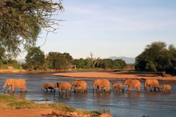 Elephants in river sunset Save The Elephants @ste_kenya Elephant Watch Camp Samburu Kenya