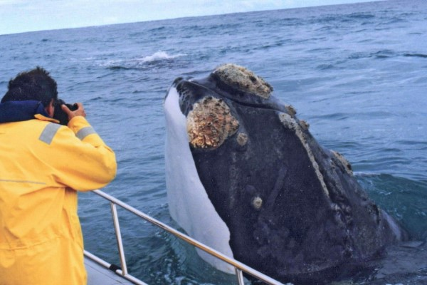 Grootbos-whale-watching-boat-trips-walker-bay-SouthAfrica-