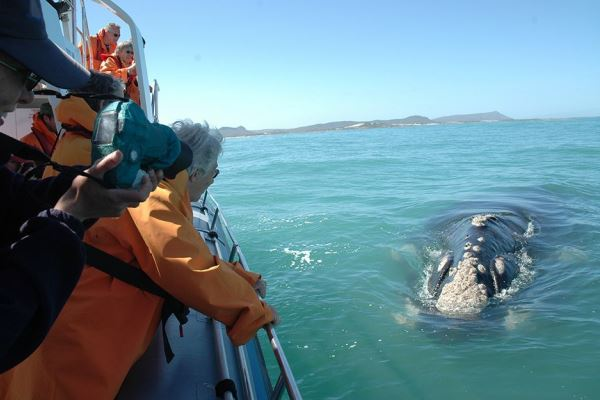 Grootbos-whale-watching-boat-trips-walker-bay-SouthAfrica-camera