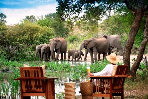 Lady-elephants-tanda-tula-Kruger-SouthAfrica-@tandatula-600-400