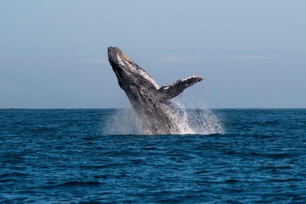 Manafiafy-boat-trip-whale-watching-Madagascar-@madaclassicc
