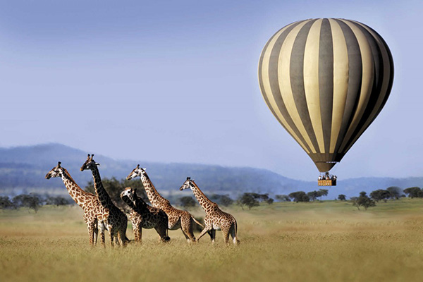 Balloon flying over giraffes, Singita