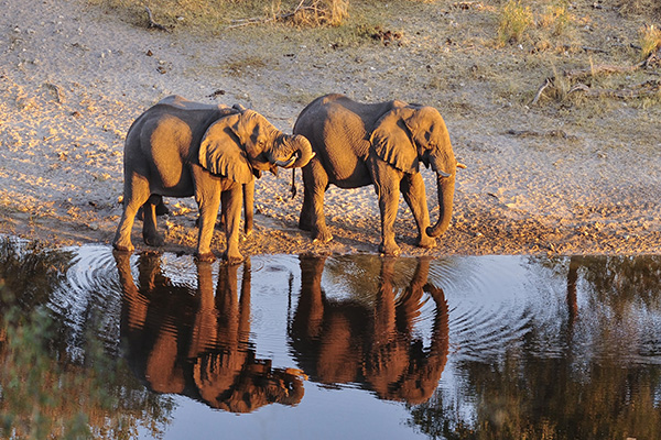 Meno A Kwena elephants drinking in the river, Makgadikgadi, Botswana