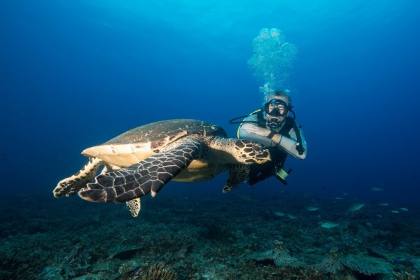Scuba diving with sea turtles, North Island Seychelles, Noahsark Marc Stickler