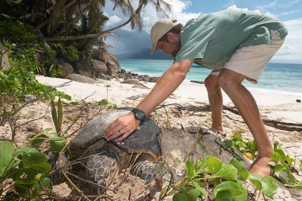 North Island noahs ark sea turtle nesting turtle migration