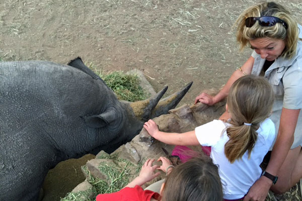 Gully-family-ants-rhino-education-@antscollection-antsnest-SouthAfrica