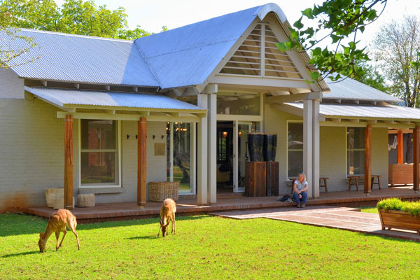 morukuru- farm-house-buskbuck feeding-on-the-lawn