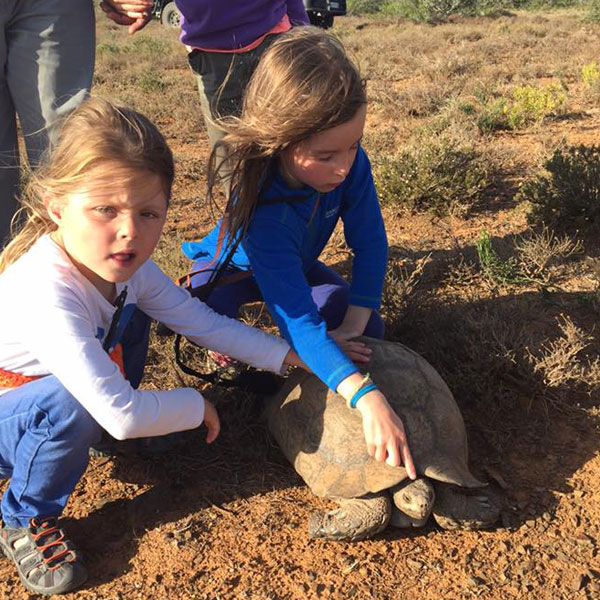 kwandwe-tortoise-South-Africa-family-safari-gully