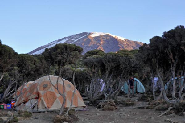 A-camping_Millennium-Camp-kili-juniper-trees