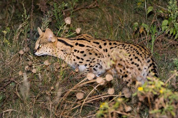 dumataucamp12-linyanti-wilderness-safaris-600-400