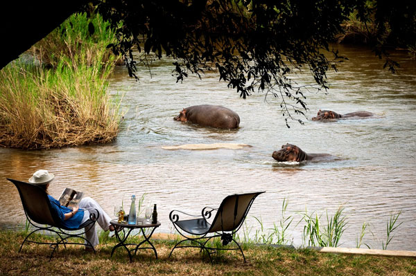 Hippo-lady-drinks-river-LionSands-SabiSands-SouthAfrica