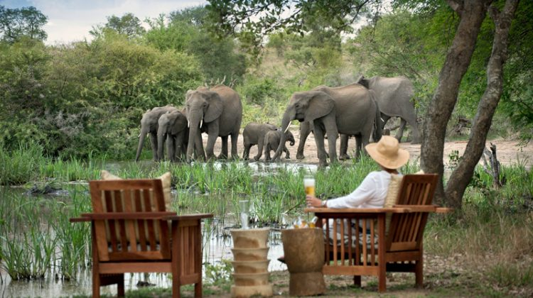 Watching elephants on safari in Tanda Tula field camp South Africa holiday
