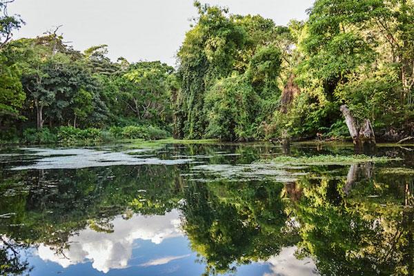 Lake_reflection_garden_Ngare_Sero-Mountain_lodge-Arusha-Tanzania