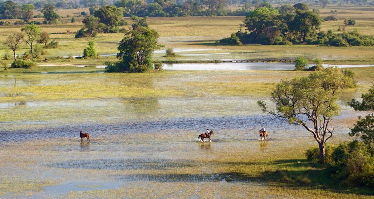 Horse riding in the Okavango Delta Botswana