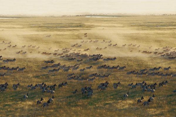 best-for-Zebra-migration-Unchartered