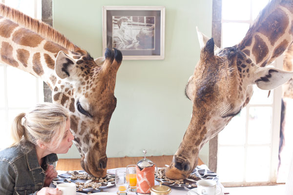 Giraffe-Manor---Giraffes-Breakfast---The-Safari-Collection-600-400