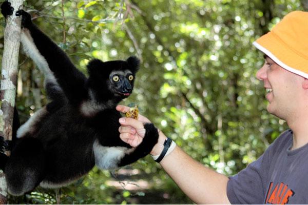 Madagascar-Bush-House-shake-lemurs-hand-Indri-Indri-600-400