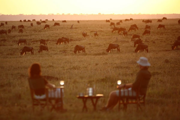 Elephant-Pepper-Camp-Masai-Mara--Wildebeest-grazing-Kenya-600-400