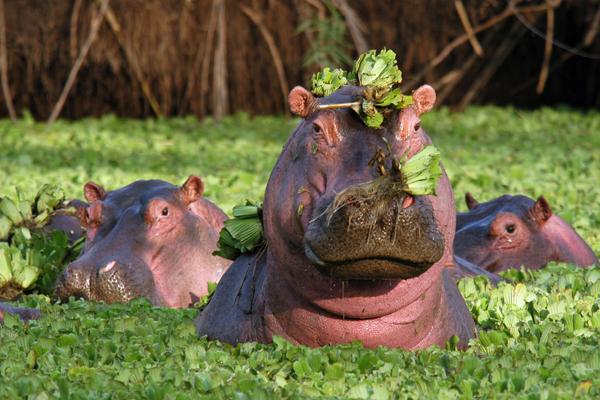aardvark safaris facts Grumeti Tented Camp, Tanzania