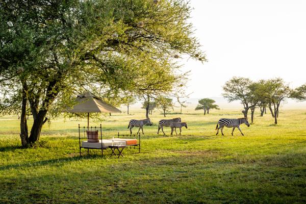 aardvark safaris facts Singita Sabora Tanzania