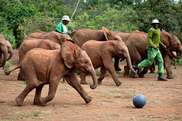 Rescued elephants feature on A Perfect Planet