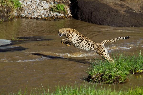 leopard-kicheche-camps-600