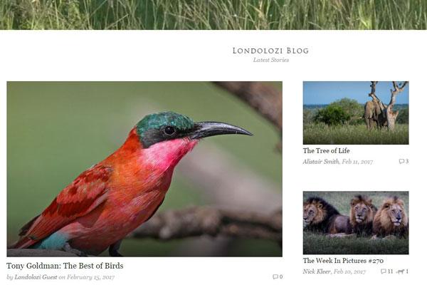 londolozi-blog-600