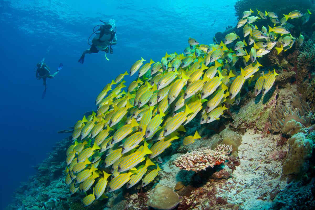 Six Senses Laamu diving, Maldives