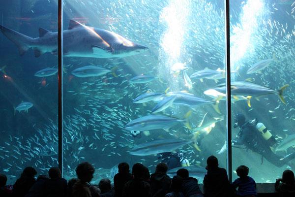 two-oceans-aquarium