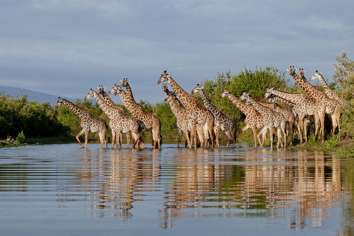 Dream Safari Tanzania