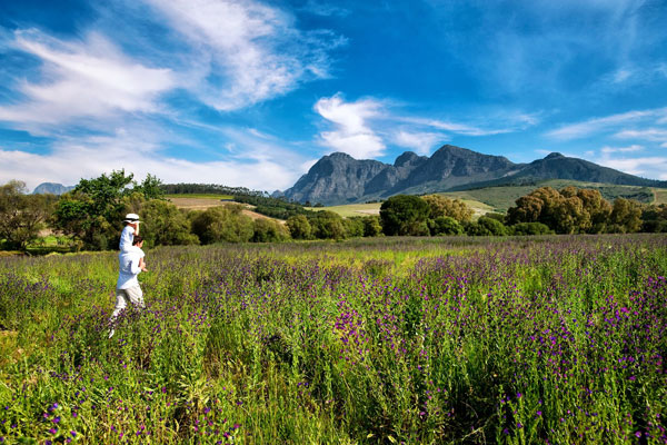child and father walking with wild flowers with Simonsberg backdrop Cape South Africa © Babylonstoren