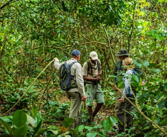 Forest Walk in the Congo