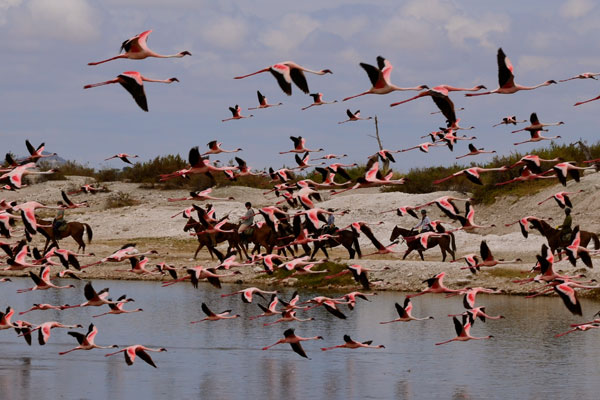 Flamingos at Lake Natron, new riding safari by Kaskazi Riding Safaris
