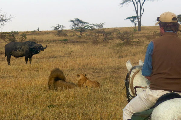 Simon Kenyon guiding riding safaris in the Masai Mara with buffalo and lions