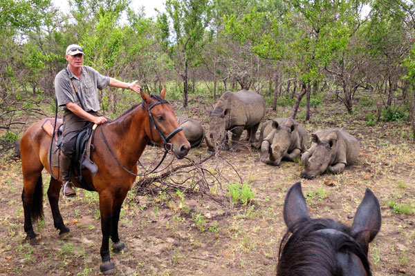 Horse riding guide Philip Kusseler - Wait A Little with rhino lying down