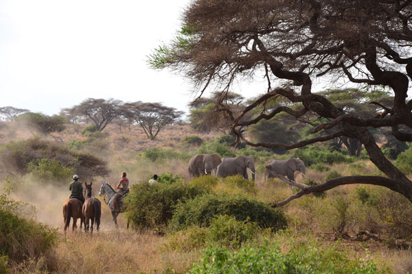 new rides Kaskasi riding safari in the Serengeti, elephants and group of horseriders