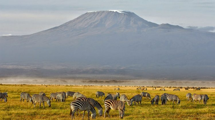 Climbing Mount Kilimanjaro with zebra in the foreground - AndBeyond