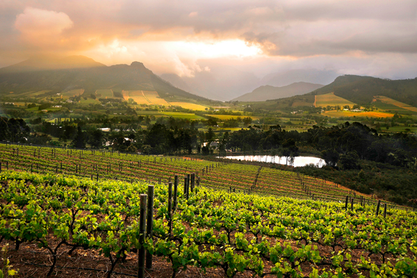 Vineyards, Cape Winelands, South Africa, La Petite Ferme