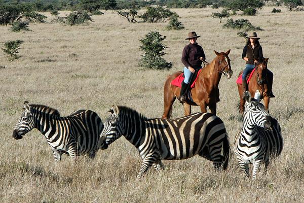 Lewa Wilderness Trails riding with zebra Kenya