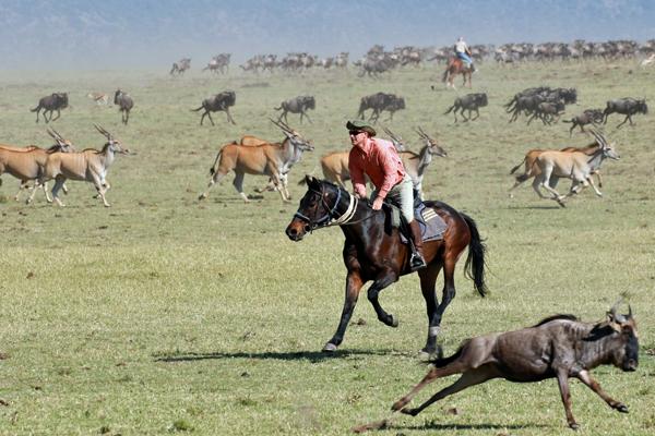 Galloping with wildebeest, Masai Mara, Kenya, Offbeat Safaris