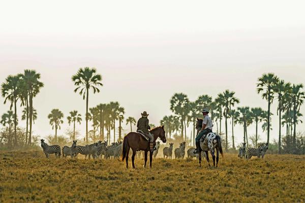 Zebra migration ride, Makgadikgadi salt pans, Botswana, Uncharted Africa