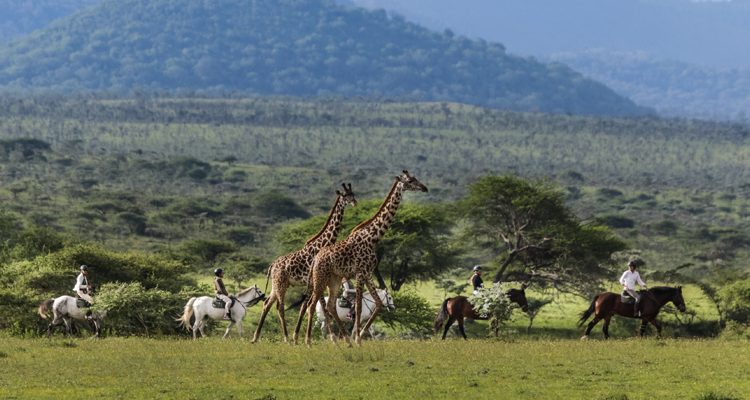 Can I ride inAfrica? Riding at Ol Donyo Lodge with giraffe, Great Plains Conservation, Kenya