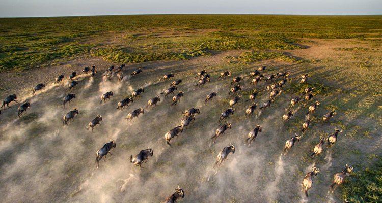wildebeest migration blog