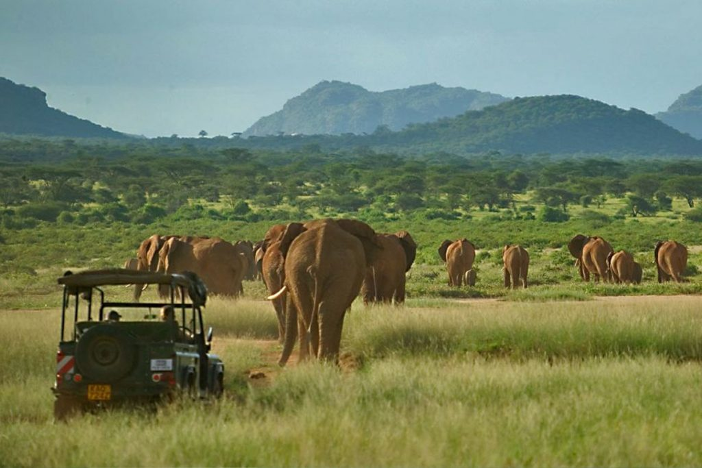 elephants in Kenya - large herds walk through Elephant Watch Camp, Samburu National Park